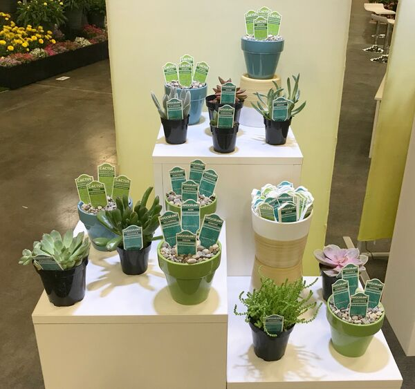 Cacti and Succulent Tags
