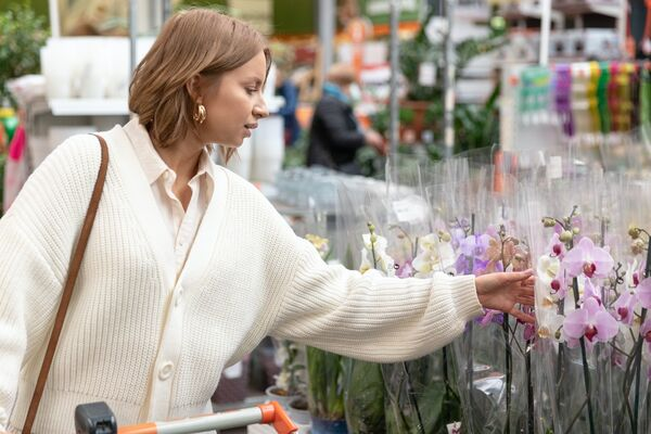 Orchids have become a mass product and sales prices have fallen